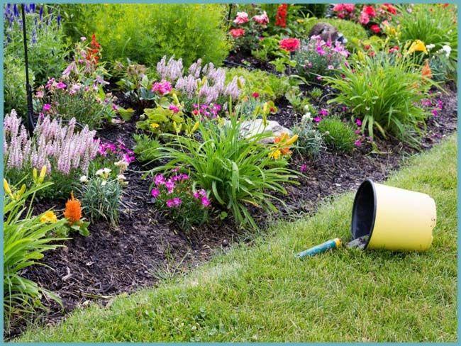 Клумба непрерывного цветения: схемы с описанием цветов