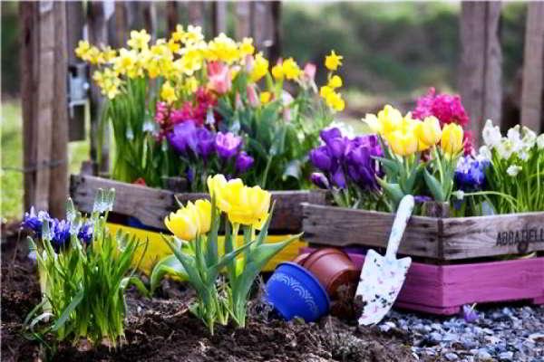 Луковичные цветы — многогранное проявление природного изящества