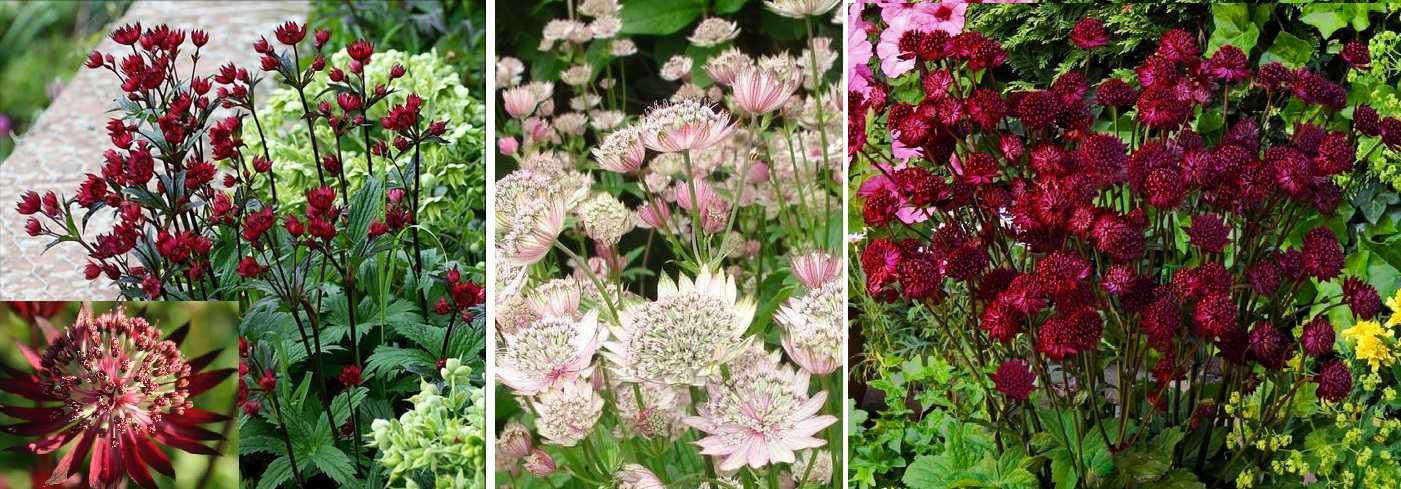 цветы в саду и на даче