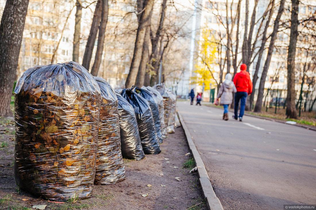 Уборка опавших листьев осенью: как правильно ее делать и нужна ли она вообще?