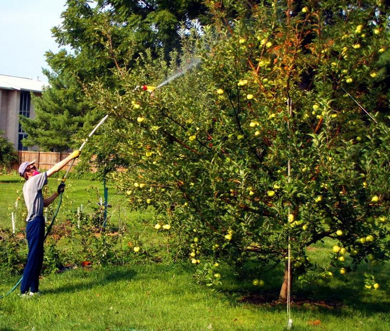 Как и чем опрыскивать сад осенью: средства для осенней обработки плодовых деревьев, советы опытных садоводов