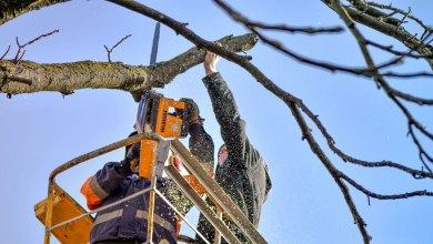 Спил и кронирование деревьев на участке. что можно спилить, а что нельзя?