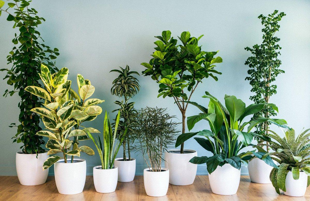 Комнатные растения для дома с фото и названиями