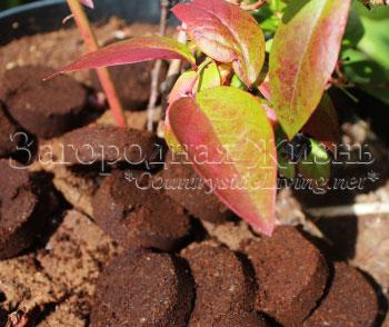 Использование в садоводстве кофейного жмыха как удобрения – дачные дела