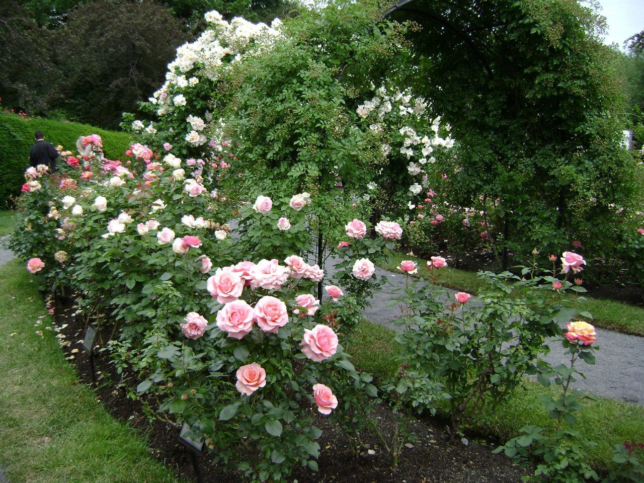 Стихи росы на розах - сборник красивых стихов в доме солнца