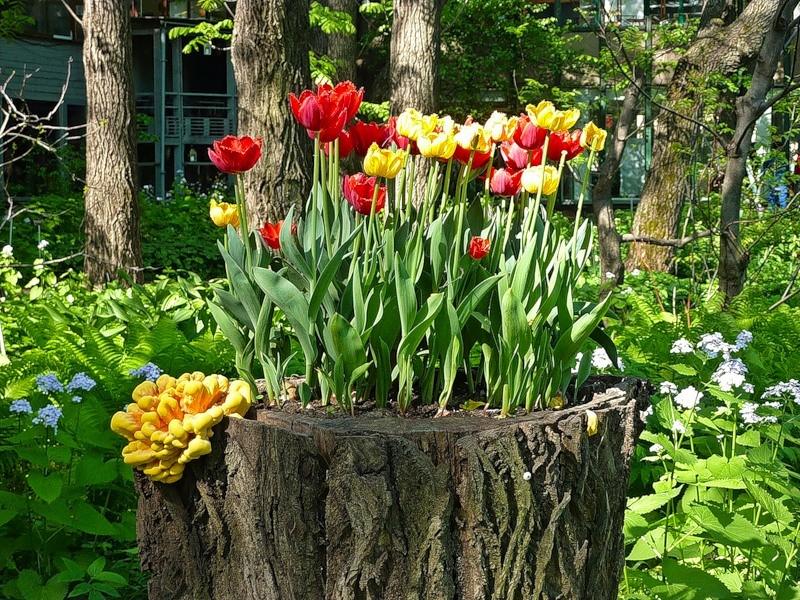 декоративный сад своими руками фото