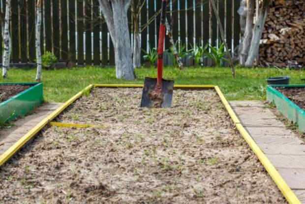как подготовить землю для посадки чеснока