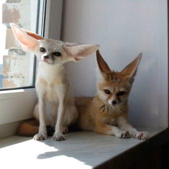 Домашние животные в квартиру (36 фото): список маленьких и больших неприхотливых питомцев, которых можно держать в квартире