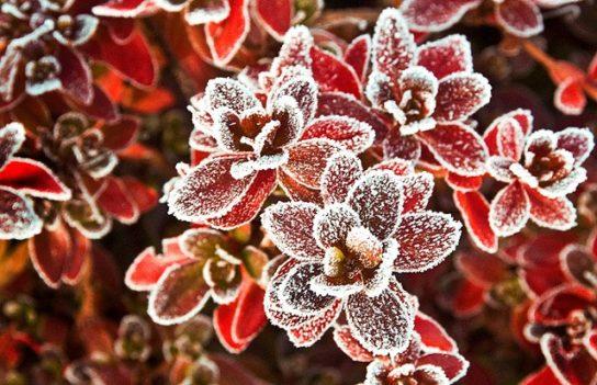 Зоны морозостойкости