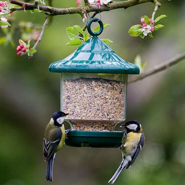 Кормушки для птиц своими руками: материалы для создания кормушек, виды кормушек, места развешивания кормушек, идеальное время прикорма птиц, полезный и вредный корм | крестик