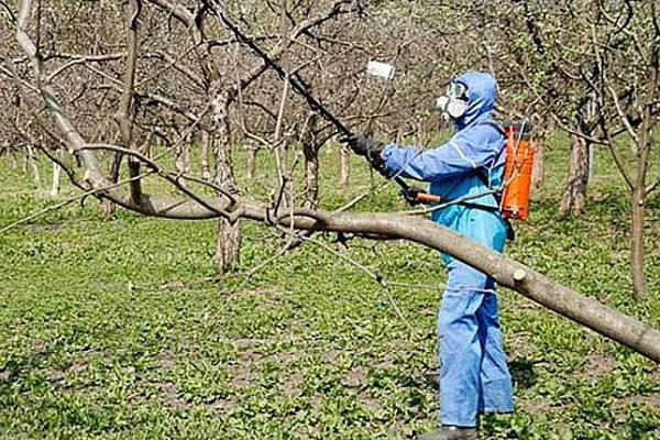 когда опрыскивать деревья