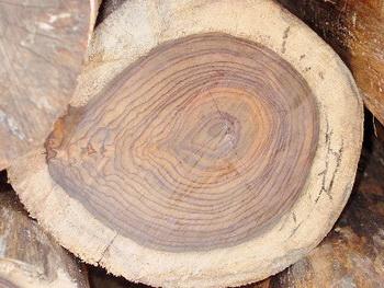 Виды деревьев и список растущих в россии