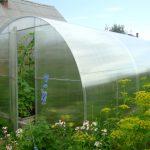 Как построить теплицу из поликарбоната: размеры, сборка, характеристики