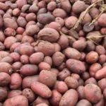 Как хранить картофель на балконе