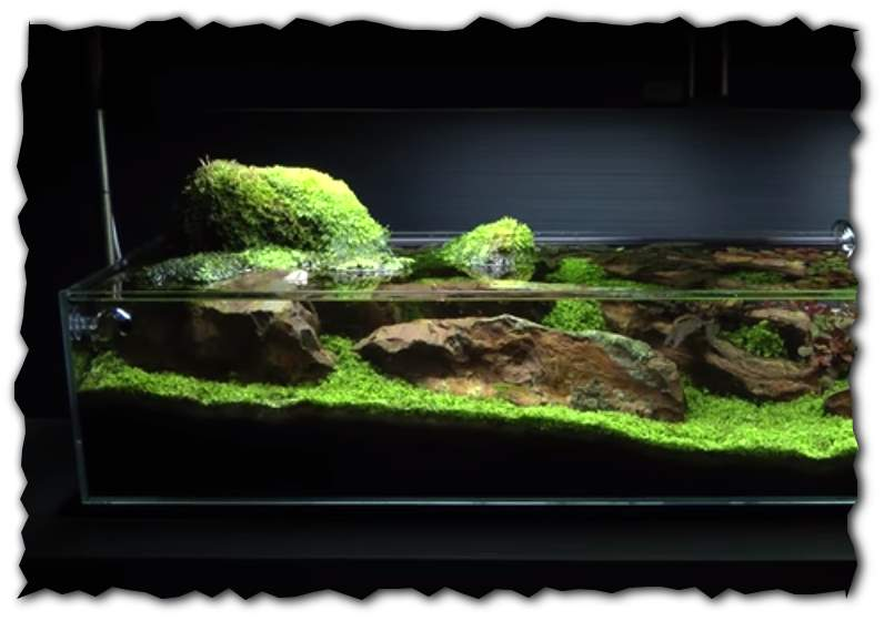 Aquascape Tutorial Guide