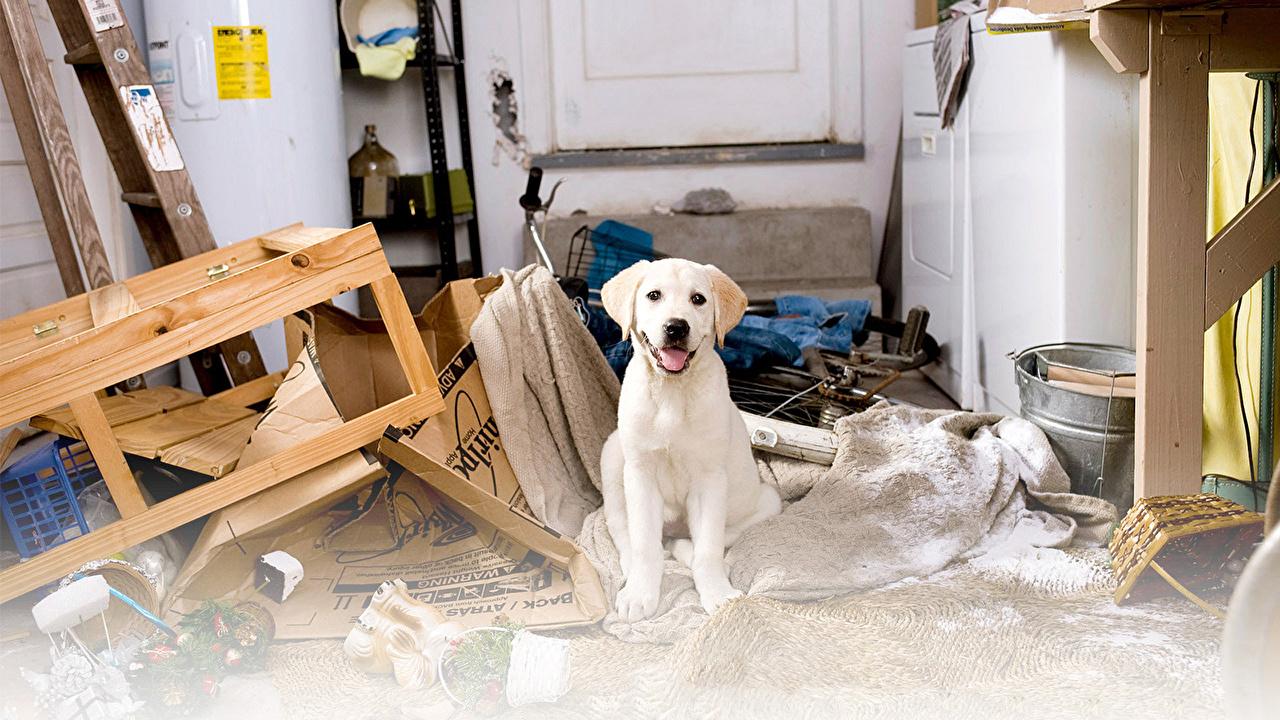Собака и ремонт