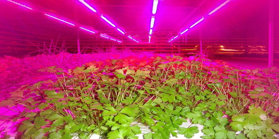 Растения под светодиодами