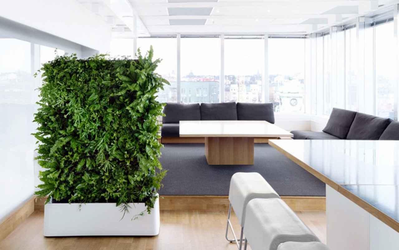 Живая перегородка из растений