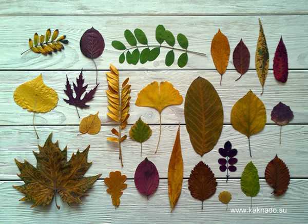 Лето под прессом. как собирать и сушить растения для гербария