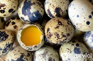 Перепелиные яйца: польза и вред. как правильно употреблять яйца перепелки?