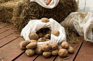Правильное оборудование погребов и подвалов для хранения картофеля