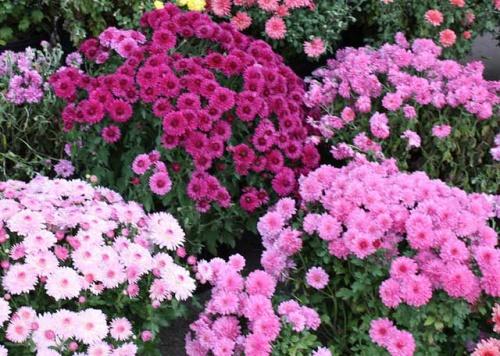 Что можно посадить на огороде. кому нужны грядки
