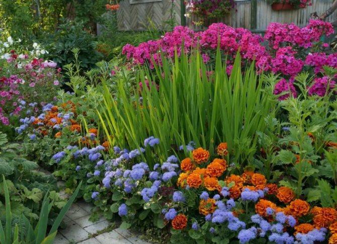 высокие цветы для клумбы