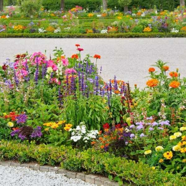 цветники из многолетников
