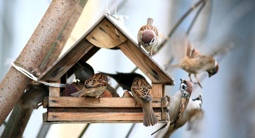 как сделать кормушку для птичек