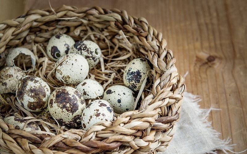 полезны ли перепелиные яйца