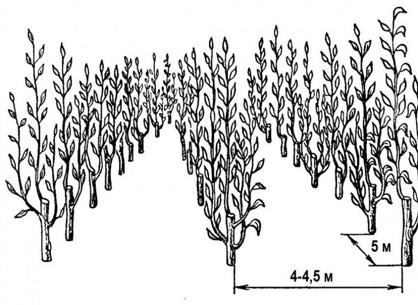 Расстояние от дерева до забора с соседом: на каком можно сажать, нормы посадки кустарников по снип и закону, сколько метров отступать по санпин
