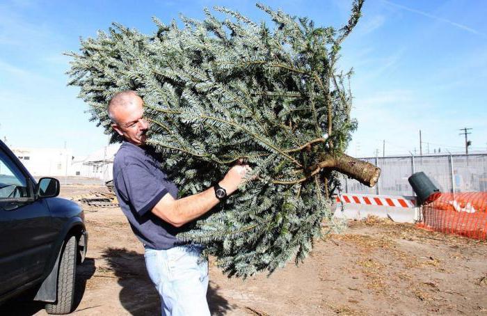 можно ли срубить дерево на своем участке