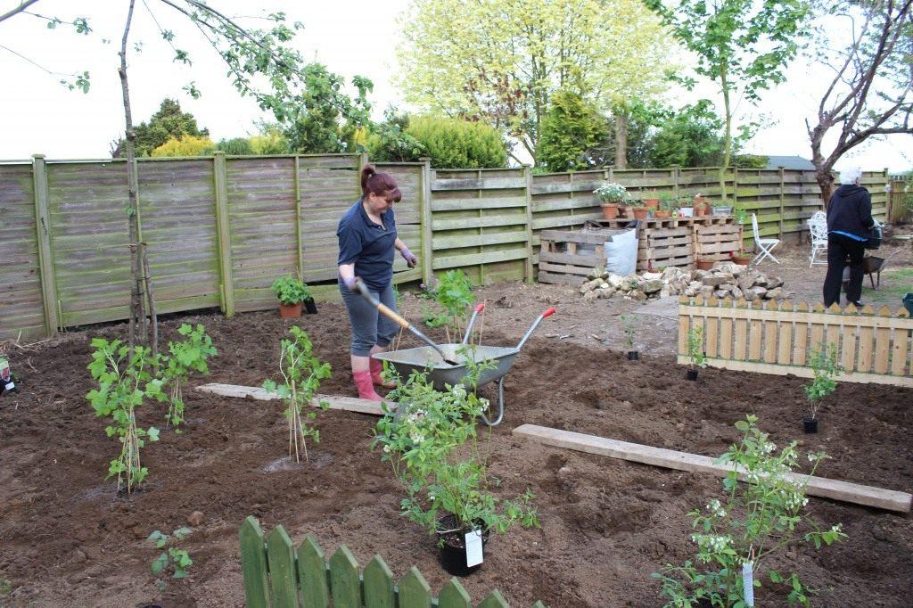 Сад своими руками: какие саженцы купить, от каких деревьев избавиться. какие деревья и кустарники посадить в саду