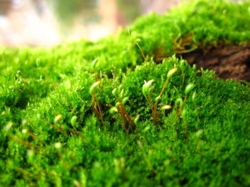 Мох на деревьях — польза, вред, методы профилактики и борьбы