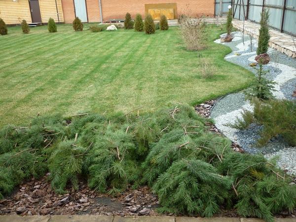 Как правильно укрыть растения на зиму? способы и материалы