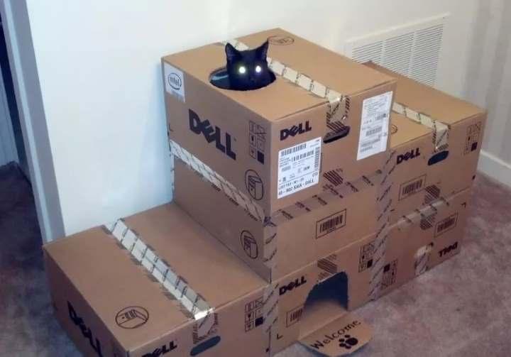 домик для котика своими руками