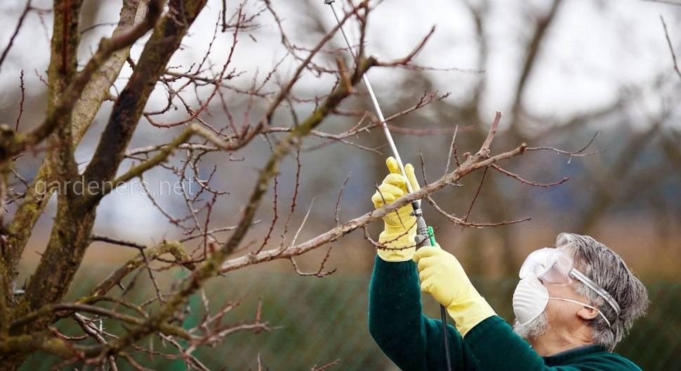 Болезни и вредители сада: обработка весной, в апреле и мае. обработка сада весной от болезней и вредителей