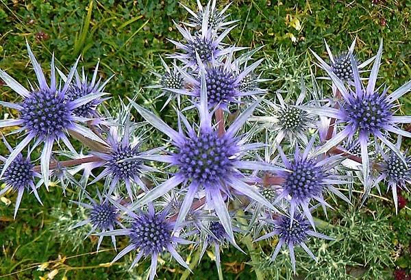 Сухоцветы — фото и названия, идеи букетов и композиций для интерьера