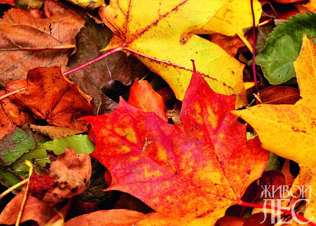 Осенние листья: убирать или нет?