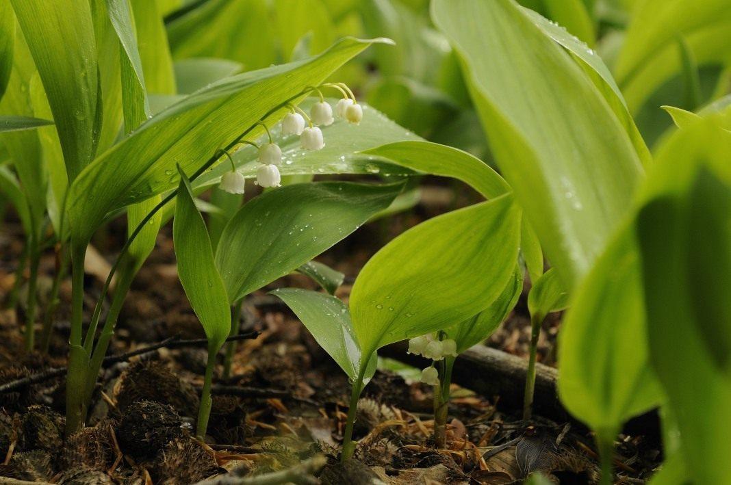 Страшная красота: 9 самых опасных растений на отдыхе