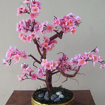 Цветы сакуры, где растет сакура, где следует расти красивому дереву японской вишне