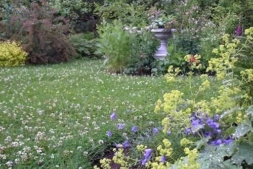 Когда сеять клевер в открытый грунт: объясняем по порядку