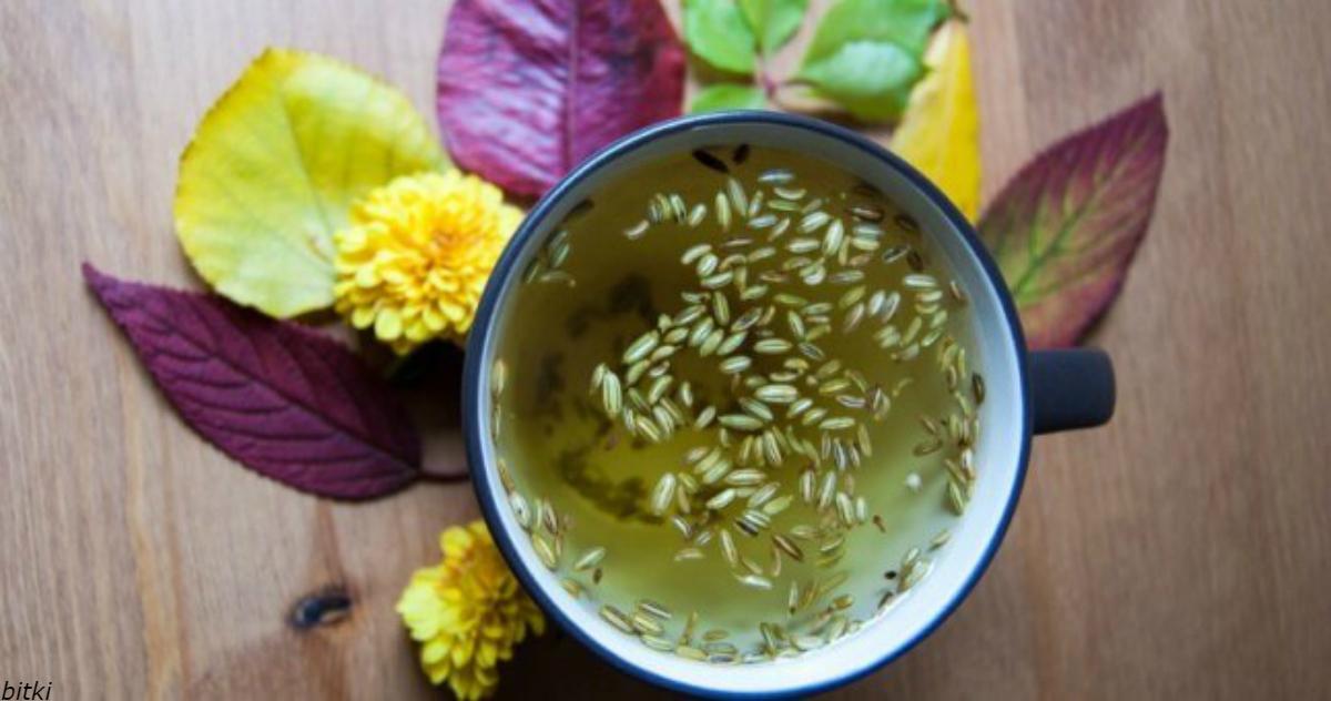 Семена фенхеля (saunf) - лечебные свойства и противопоказания