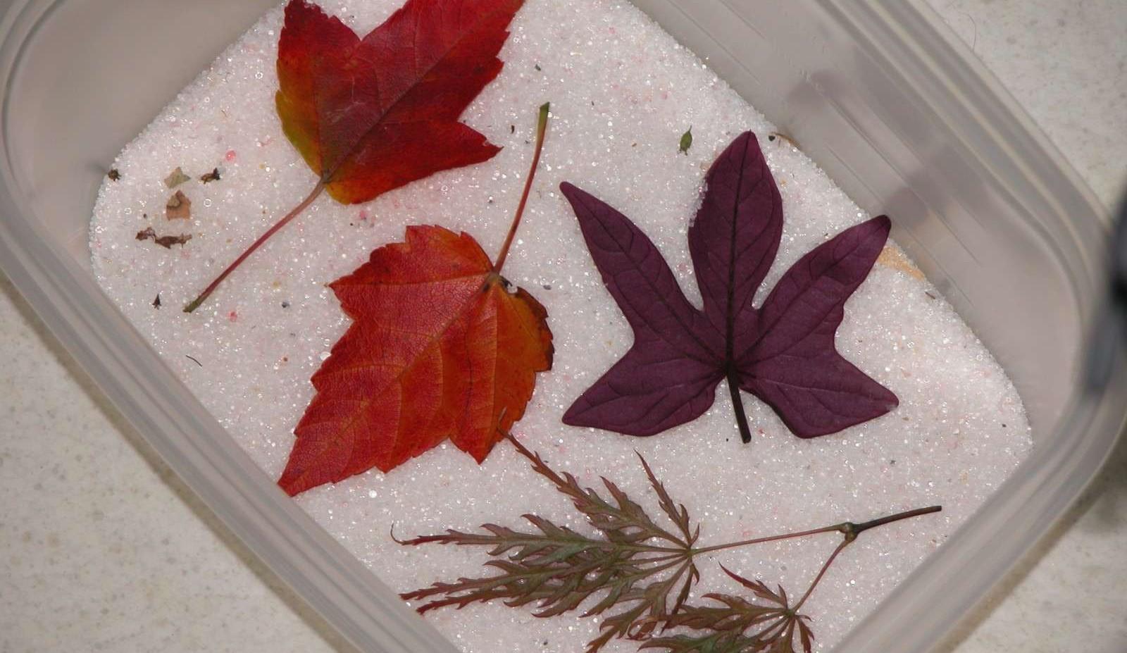 Как сделать гербарий своими руками? гербарий по биологии. гербарий из листьев
