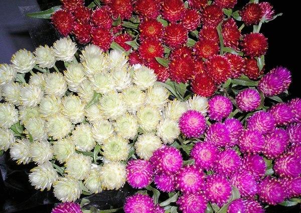 Сухоцветы для букета: фото и описания