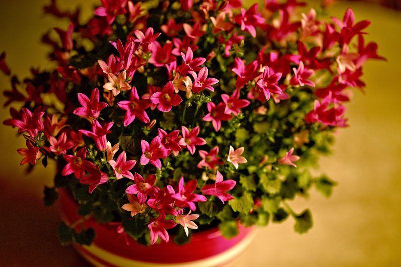 Ультрафиолетовая лампа для растений: выбираем уф-лампу для выращивания комнатных цветов. фитолампа домашнего использования – что это такое?