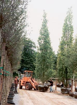 Как пересадить яблоню осенью на новое место: когда лучше пересаживать – zelenj.ru – все про садоводство, земледелие, фермерство и птицеводство