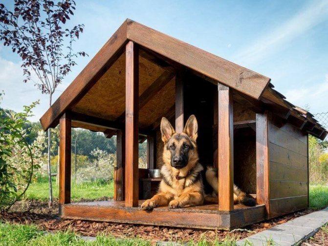 как сделать будку для собаки своими