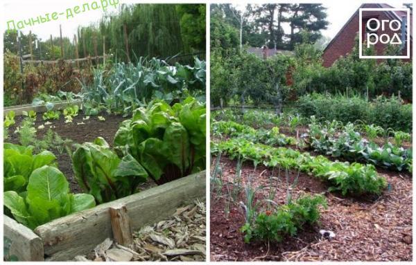 Секреты размещения огорода на небольшом участке – дачные дела