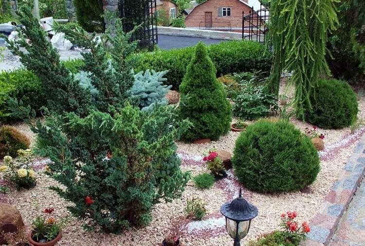 вк conifers